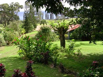 View of Malanai property from Hale Manu deck